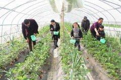 武汉大学2020年农村致富带头人专题培训班_课程_方案_计划